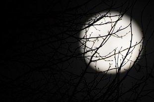 Czy Księżyc ma wpływ na nasze życie?