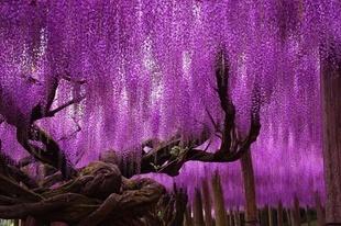13 drzew, które wyglądają jakby pochodziły nie z tego świata