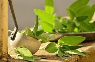 Szałwia - cudowna roślina na uderzenia gorąca