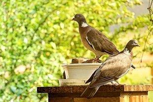 Nie karm gołębi na parapecie!