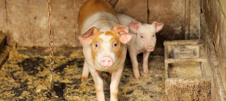 Spis zwierząt gospodarskich