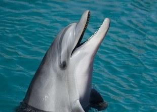 Jacques Mayol - Człowiek delfin