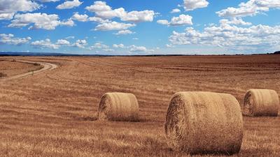 Podatek rolny - zwrot nadpłaty