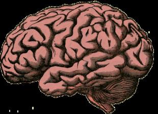 Co powinnaś wiedzieć o swoim mózgu