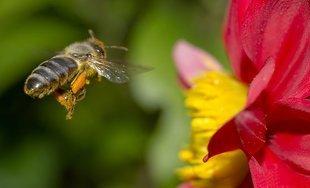 Bezcenne pszczoły