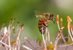 Trzy czwarte Polaków wierzy w mity dotyczące pszczół i twierdzi, że masowo wymierają