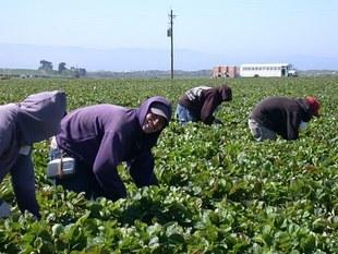 Zbieranie truskawek, kelnerowanie nad morzem? Jak wybrać sezonową pracę