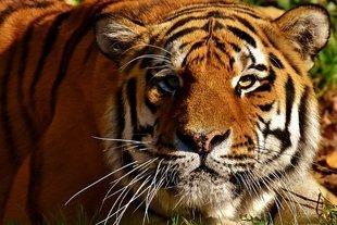 Zwierzęcy horoskop - jakie zwierzę jest twoim patronem? Poznaj swoje ukryte cechy charakteru!