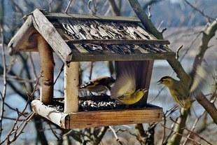 Dokarmiasz zimą ptaki? Musisz o tym wiedzieć!