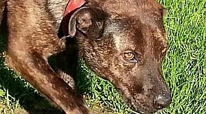 Zapytanie o oferty na odławianie, opiekę bezdomnych zwierząt.