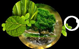 10 miliardów złotych na ochronę środowiska