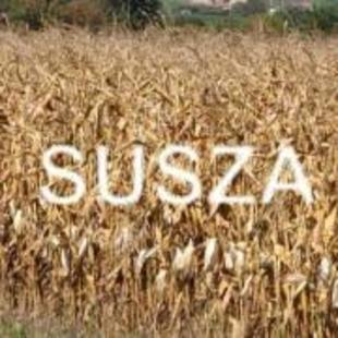 Ogłoszenie o szacowaniu strat spowodowanych suszą