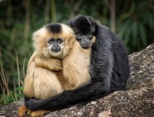 Przytulanie jest lepsze niż seks?