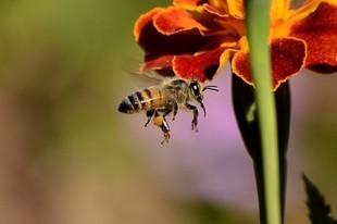Kiedy użądli cię pszczoła