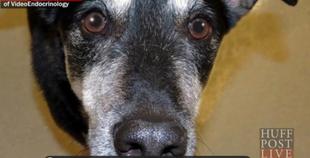 Frankie, pies, który rozpoznaje raka