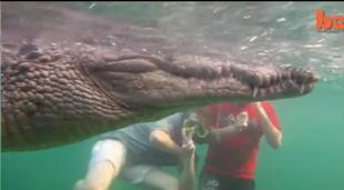 Pływając z krokodylem...
