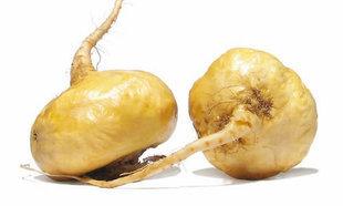 Maca - peruwiański skarb na menopauzę, płodność i erekcję