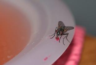 Domowe ekologiczne sposoby na muchy