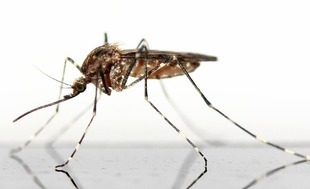 Komary - zmora letnich wieczorów! Zobacz, jak się ich pozbyć!