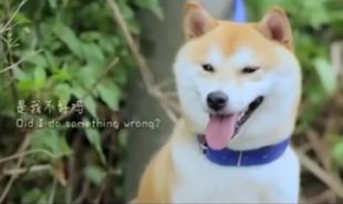 Historia tego psa wyciska łzy z oczu