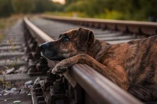 Czy psy są zazdrosne?
