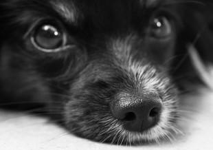 Kundelki - najmądrzejsze psy na świecie!