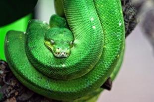 Jak atakują węże?