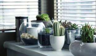 5 roślin rekomendowanych przez NASA do oczyszczania domu