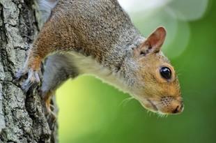 Dlaczego wiewiórki lubią masturbację?