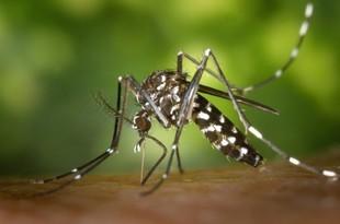 Komary, gzy, meszki. Co nas gryzie latem?