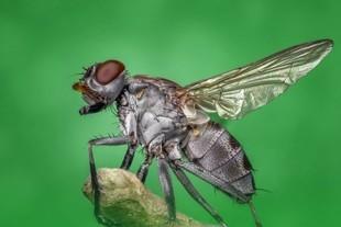 Domowe sprawdzone metody na muchy