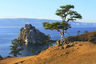 Bajkalska witamina P -  największy skarb rosyjskiej medycyny naturalnej