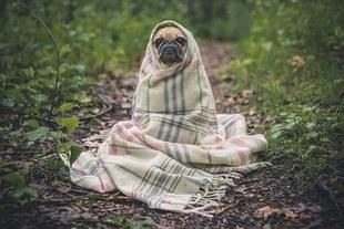 Jak wyjechać z psem zagranicę?