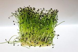 Codzienne spożywanie rzeżuchy może zredukować zmarszczki nawet o 40 procent!