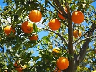 Biowitalność - przełom w dietetyce?