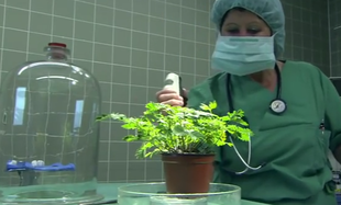 Czy rośliny czują ból?