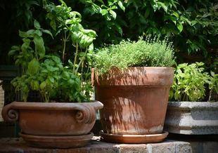 Własne zioła w kuchni - jak założyć ogród na balkonie