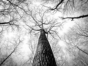 Magiczna moc drzew