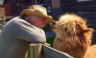 Alpaki - moja miłość na resztę życia