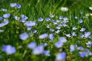 Magiczna moc roślin - odpędzają szatana, strzegą przed złem