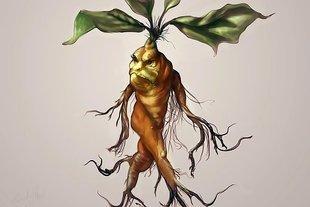Mandragora - tajemnicza roślina człowiek