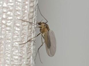 Naturalny środek na komary i kleszcze