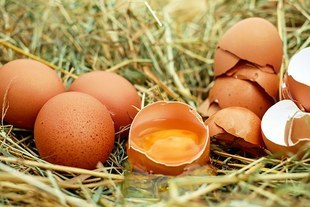 O jajkach bez ściemy
