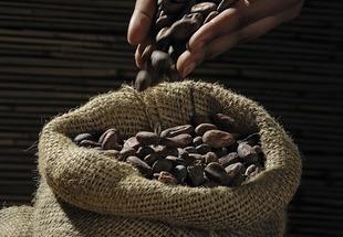 Kakao - napój bogów