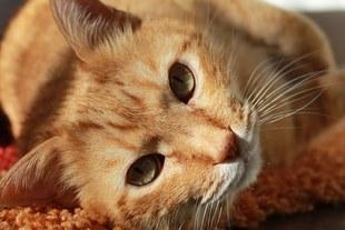 Naukowcy udowodnili, że koty mogą leczyć i przedłużać życie! Co jeszcze potrafią koty?