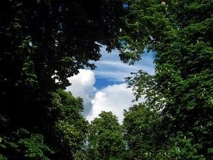Drzewa rozmawiają ze sobą i opiekują się swoimi dziećmi! To już fakt naukowy!