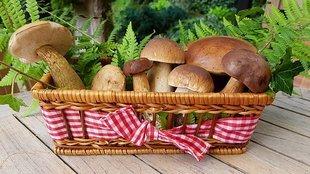 Czy warto jeść grzyby?