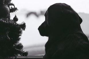 Święta to jeden z najbardziej stresujących okresów w życiu