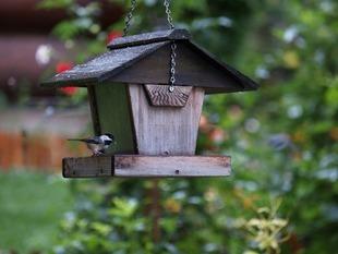 Karmnik dla ptaków - jaki powinien być?