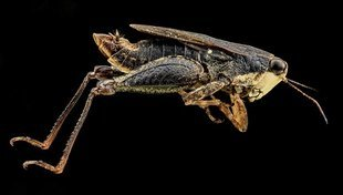 2 miliardy ludzi codziennie jada owady